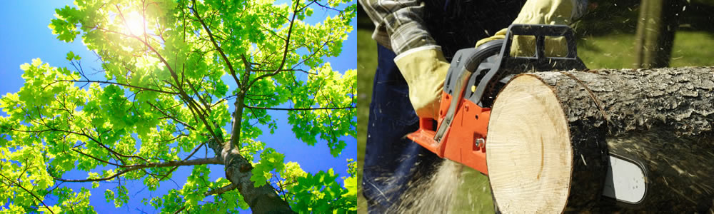 Tree Services Taft